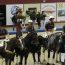 Campeonato Masters de Horseball no CEIA